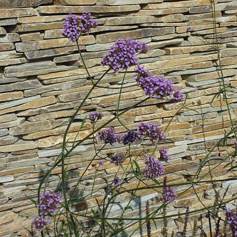 Plantsmens Garden by Gardens 2 Design, Beaconsfield